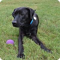Adopt A Pet :: Leo - Huntsville, AL