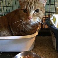 Adopt A Pet :: Mo Mo - Monroe, CT