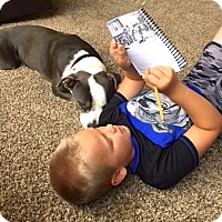 Adopt A Pet :: Reece - Scottsdale, AZ