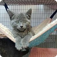 Adopt A Pet :: Haley - Umatilla, FL