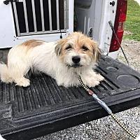 Adopt A Pet :: LOGAN - Cadiz, OH