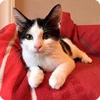 Adopt A Pet :: Maci - Centerville, GA