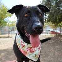 Adopt A Pet :: Addi - Sponsored by Elen Castleberry - Chico, CA