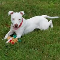 Adopt A Pet :: Salt - Clearwater, FL