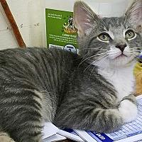 Adopt A Pet :: Sprout - Trevose, PA