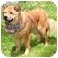Photo 4 - Australian Shepherd Mix Dog for adoption in Cincinnati, Ohio - Skip