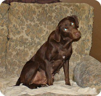 Labrador Retriever Mix Dog for adoption in Lewisville, Indiana - Autumn