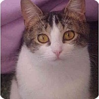 Adopt A Pet :: Smidgen - Jenkintown, PA