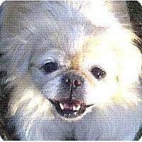 Adopt A Pet :: Flora-VA - Mays Landing, NJ