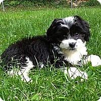 Adopt A Pet :: Panda - ADOPTED - Warwick, NY