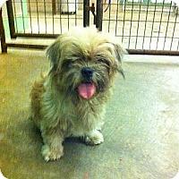 Adopt A Pet :: Sam - Peru, IN