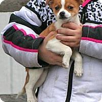 Adopt A Pet :: Morpheus - Spring City, PA