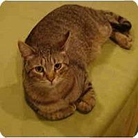 Adopt A Pet :: Linus - Muncie, IN