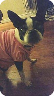 Boston Terrier Mix Dog for adoption in Weatherford, Texas - Maude