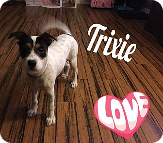 Jack Russell Terrier Mix Dog for adoption in Walker, Louisiana - Trixie