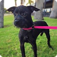 Adopt A Pet :: Wendy - Scottsdale, AZ