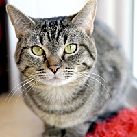 Adopt A Pet :: Okey - Chattanooga, TN
