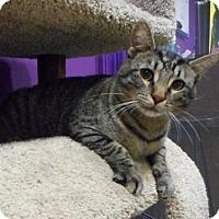 Adopt A Pet :: Marvin - Herndon, VA