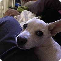Adopt A Pet :: Trudy - Las Cruces, NM