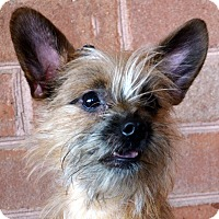 Adopt A Pet :: Lucas - Bridgeton, MO