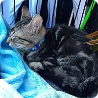 Adopt A Pet :: Isaac - La puente, CA