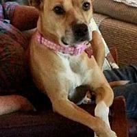 Adopt A Pet :: Frida Mae - Tucson, AZ