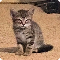 Adopt A Pet :: Reilly - Sidney, ME