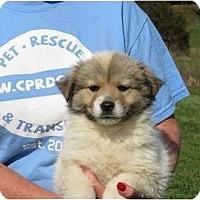 Adopt A Pet :: Treasure - Westbrook, CT