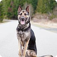 Adopt A Pet :: MAX - Kingston, WA