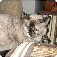 Adopt A Pet :: Emma - San Ramon, CA