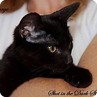 Adopt A Pet :: George - Leamington, ON