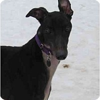 Adopt A Pet :: Marshall (Iruska Marshall) - Chagrin Falls, OH