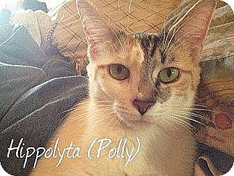 Domestic Shorthair Cat for adoption in Lenhartsville, Pennsylvania - Polly