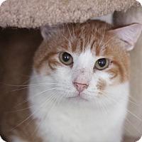 Adopt A Pet :: Stillsville - Chicago, IL