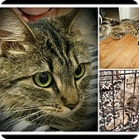 Adopt A Pet :: Berry - San Fernando Valley, CA