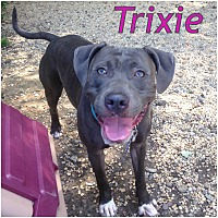 Adopt A Pet :: TRIXIE - Tinton Falls, NJ
