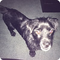 Adopt A Pet :: Charlie - Irmo, SC
