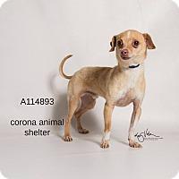 Adopt A Pet :: KENNEL 15 - Corona, CA