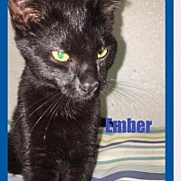 Adopt A Pet :: Ember - Brainardsville, NY