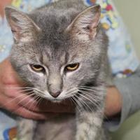 Adopt A Pet :: Rugrat - Robinson, IL