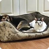 Adopt A Pet :: Annie - Dumfries, VA