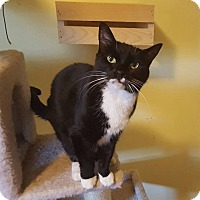 Adopt A Pet :: Mia - Old Bridge, NJ