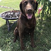 Adopt A Pet :: Ace - Midlothian, VA