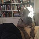 Adopt A Pet :: Cap