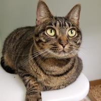Adopt A Pet :: Jasmine - Cleveland, OH