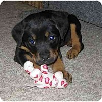 Adopt A Pet :: Kelcy - Chandler, IN
