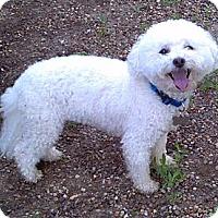 Adopt A Pet :: Zach - Geneseo, IL