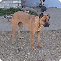 Adopt A Pet :: Simon is sweet! - Copperas Cove, TX