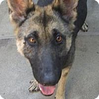 Adopt A Pet :: Mary Anne - Canoga Park, CA