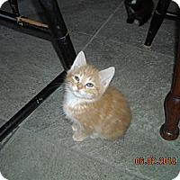 Adopt A Pet :: Boston Strong - Riverside, RI